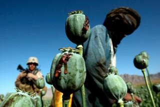 Afghanistan Drugs Opium