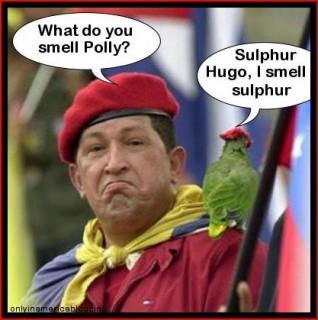 chavez-parrot_sulphur