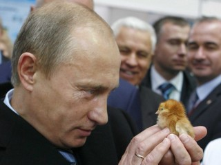 putin-stares-down-a-young-chick-at-an-agricultural-exposition