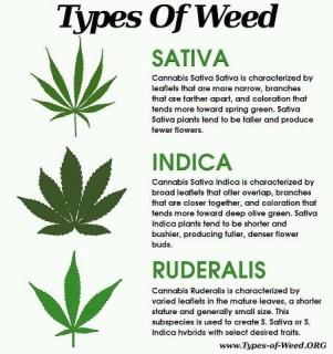3-types-cannabis2