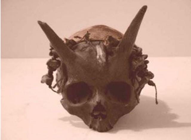 human horns