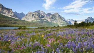 Beautiful mountain flowers and fields