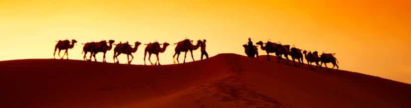 Silk-Road-Camels