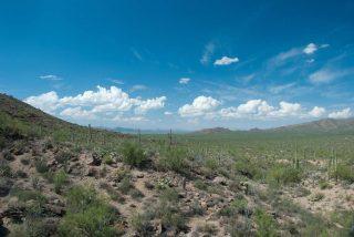 Sonora Desert - Arizona