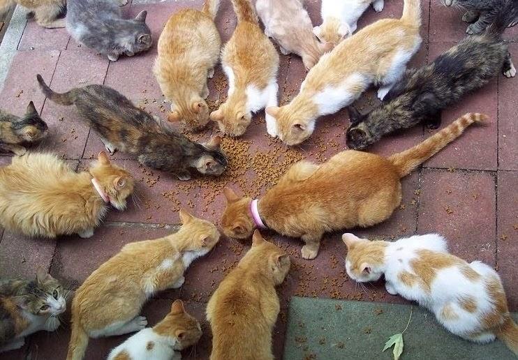 Cats broad - Copy